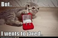 he went to jared :). I have to train my Rico TI do this trick!  (extra catnip baby!!!)