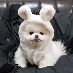bunny 🐰 Cute Funny Animals, Cute Baby Animals, Zoo Animals, Funny Cute, Funny Dogs, Animals And Pets, Cute Puppy Videos, Fluffy Animals, Cute Creatures