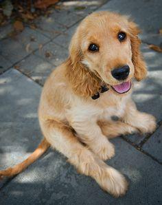 Cute puppy and dog - http://www.1pic4u.com/blog/2015/01/02/suesse-hundebabys-256/