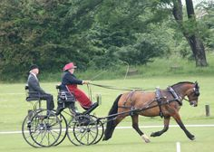 Saffy competing at the last Brighton HDT, using Hartland Spider Phaeton and Herr Schoder harness.
