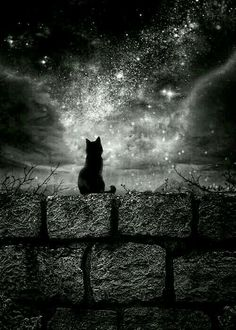 The black cat in the night! Warrior Cats, Crazy Cat Lady, Crazy Cats, Animals And Pets, Cute Animals, Animal Gato, Image Chat, Under The Stars, Beautiful Cats
