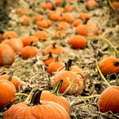 I <3 pumpkin.  and pumpkin spiced lattes, pumpkin pie, and pumpkin muffins... the list goes on :-)