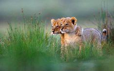 Friends Forever. Photo by Gregoire Bouguereau.