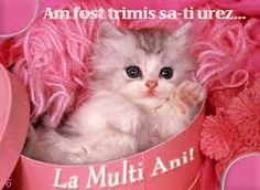 Image detail for -Pink Cat Wallpaper Cute Kitten Gif, Cute Cats And Dogs, Little Kittens, Cute Cats And Kittens, I Love Cats, Kittens Cutest, Kittens Meowing, Crazy Cat Lady, Crazy Cats