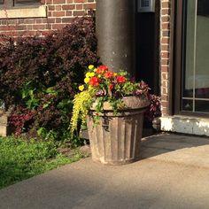 Steven's Neighborhood flowers in Summerland image permalink