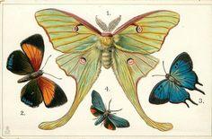 "Tucks educational #series #embossed #postcard #8. n & s america ""butterflies"",  View more on the LINK: http://www.zeppy.io/product/gb/2/152247044644/"