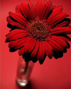 Raindrops and Roses Red Flowers, Red Roses, Beautiful Flowers, I See Red, Red Photography, Simply Red, Red Wallpaper, Flower Wallpaper, Red Walls