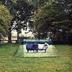 Socially Conveyed via WeLikedThis.co.uk - The UK's Finest Products -   Animal Farm Tent http://welikedthis.co.uk/?p=3203