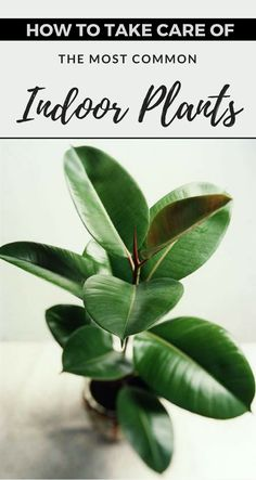 How To Take Care For The Most Common Indoor Plants