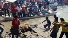 · Petition against Mexican festival torture elderly bulls and tired · Change.org