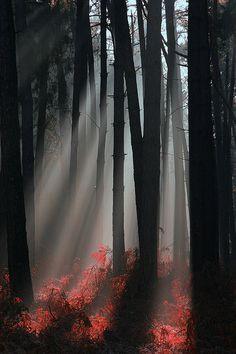Mystic forest in foggy morning, Zeelandic Flanders, Netherlands