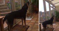 Cão Cantor Interpreta Na Perfeição Ave Maria
