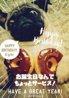 Happy Birthday Animals, Animal Birthday, Birthday Wishes, Birthday Photos, Cheers, Funny, Wishes For Birthday, Anniversary Pics, Ha Ha
