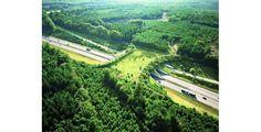 Puentes Verdes, un camino seguro para animales en carretera