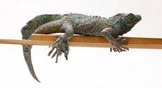 Chie Hitotsuyama roule du papier journal pour faire des sculptures incroyables 2Tout2Rien