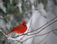Nature photography Bird photography by AtlanticCoastImages on Etsy