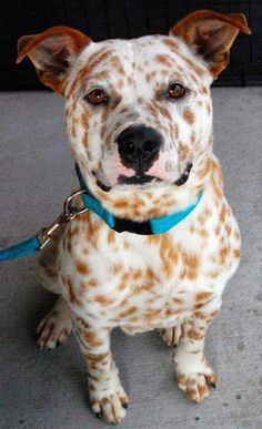 """These breed combinations show us that all dogs are beautiful, no matter what they're """"made"""" of!"""