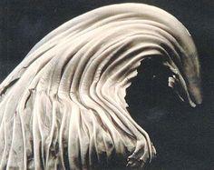 Edward Weston  Cabbage Leaf  1931  silver print