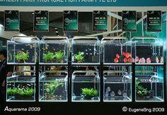 Pictures from Aquarama 2009 Aquarium Fish Store, Diy Aquarium Filter, Aquariums, Breeding Betta Fish, Tropical Fish Tanks, Betta Fish Tank, Aquarium Design, Fish Farming, Pet Fish