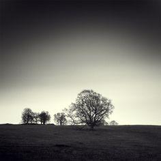 Denis Olivier, TREES, HOSH, ENGLAND, APR 13, 2006 - #975