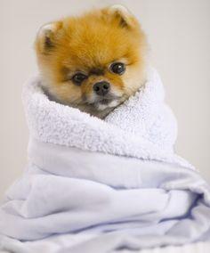 Jiffy is so stinking cute!