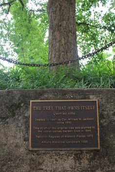 Take a walk two blocks from downtown and view the strangest  property owner around: The Tree that Owns Itself. #Athens