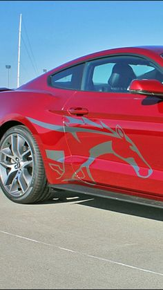 Stang decal