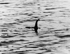 Loch Ness Monster known as 'Nessie' has been around since 1933 with over a 1,000…