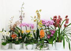 entretien pour orchidées