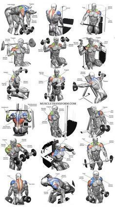The Ultimate Shoulder Workouts Anatomy. We've put together this graphic of different types shoulder workouts. Knowing the anatomy of each muscle group is Shoulder Workout Routine, Best Chest Workout, Chest Workouts, Shoulder Workouts For Men, Shoulder Workout At Home, Shoulder Exercises, Shoulder Muscles, Gym Workouts For Men, Gym Workout For Beginners