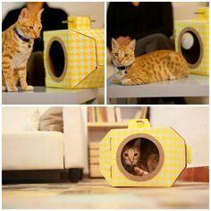 caja para gato