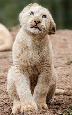 Little Lion :)