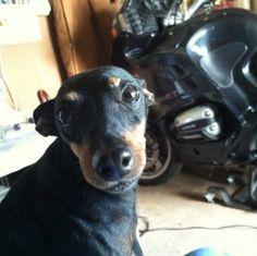 Mitzi Fisher is a contestant for True Chews Dog of the Week! #TrueChews
