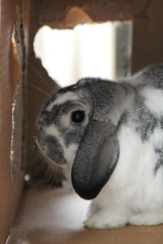No, hoomin. This hideout is for bunnies only! - June 23, 2012