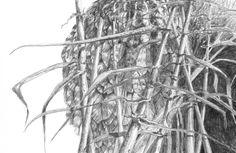 """Detail taken from British bird artist Mark Dean's """"Bittern"""", showing the nest. #birdart #markdean #birdartist #bittern #pencilwork #nestdetail"""