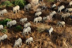 The main herd of elephants in Zakouman Nationak Park is seen in this April 5, 2013 photograph.