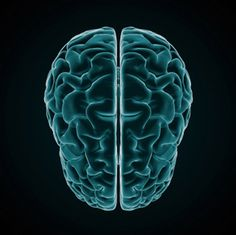 Right brain myth de-bunked.