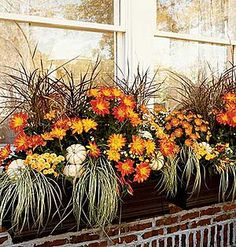 Fall Window Box idea. To get this look use Purple fountain grass,  Variegated Japanese sedge,  Florist mums, and Small white pumpkins.