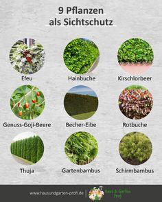 Garden Compost, Garden Soil, Garden Plants, Hydrangea Care, Nature Aesthetic, Natural Garden, Different Plants, Diy Garden Decor, Garden Styles