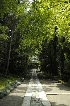 寿福寺 神奈川