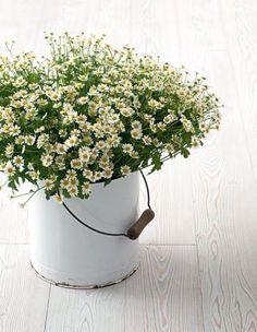 Flowers in an old bucket