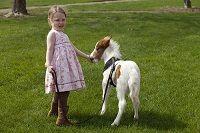 Nelis' Dutch Village Pony