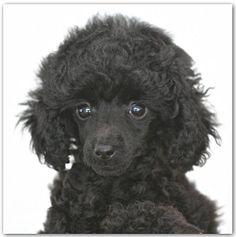 Morton s legendary hot chocolate cake calories Cute Puppies, Dogs And Puppies, Doggies, Chocolate Cake Calories, Site Photo, Four Legged, Pretty Cool, Pet Toys, Hot Chocolate