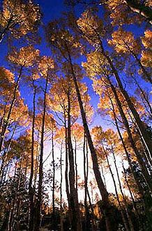 love a scene like this E Cards, Online Gifts, Scene, Fall, Photography, Autumn, Photograph, Electronic Cards, Fall Season