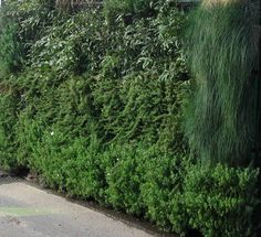 Green wall - Green walls - Sustainable Building Materials   KHD Landscape Engineering Solutions