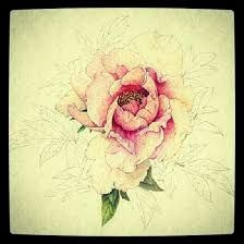 Image result for realistic peony drawings