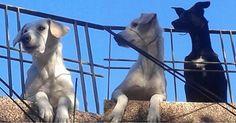Denuncia Publica! Ata a sus Perros con Alambre en Hocico y Cuello! Difundelo! FIRMA Y COMPARTE...