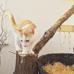 Favourite outdoor activity.  #charliethecat #love #cute #catsofsalzburg #unterfoehring #germany #cat #thiscat #ilovemypet #catlovers #lovekittens #instapet #catsagram #kitten #kitty #catstagram #kittycat #catsofinstagram #ilovemycat #catlove #catoftheday #furry #cats_of_instagram #cats #catlife #katze #katzenliebe #süssekatze #miezekatze