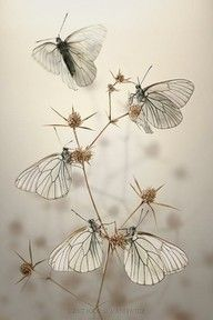 glass butterflies