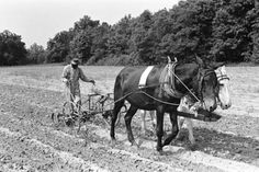 Alex Hill and his Hollywood Sepians - Song Of The Plow Mules Animal, What Makes America Great, Farm Day, Down On The Farm, Vintage Farm, Draft Horses, Old Barns, Its A Wonderful Life, Black History
